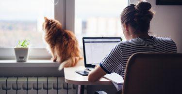 vivre avec un chat