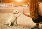 éducation chien