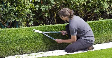entretien pelouse