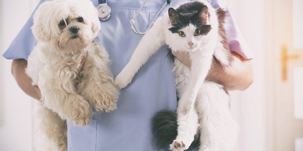 résiliation d'une assurance animale